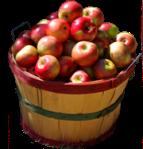 img-apples