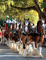 Clydesdales_Full_View